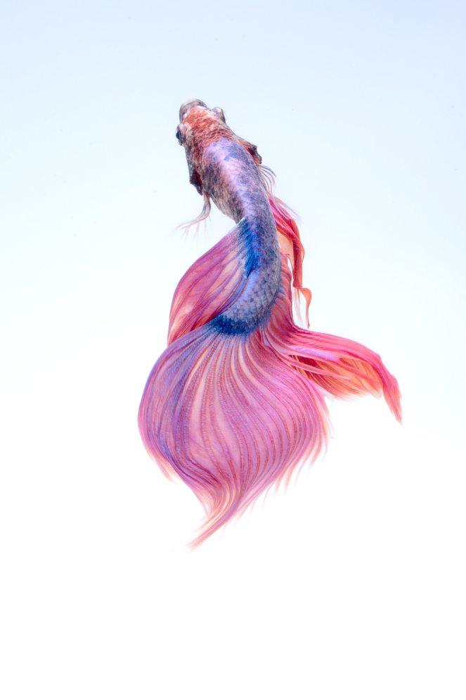 animale-arte-bellissimo-325045